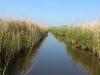Natuur, zeer waterrijk. Veen/moerasgebied.